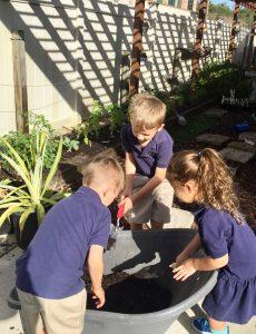 Primary Garden